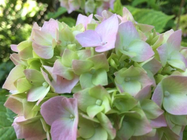 blommorna igen